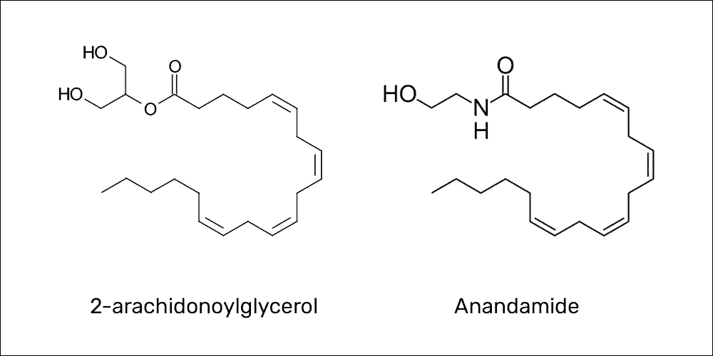Endocannabinoid molecules